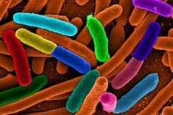 Дисбактериоз -причина белого поноса у ребенка