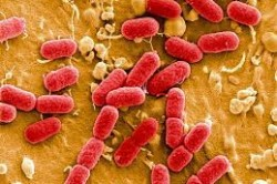 Бактерии - одна из причин появления поноса у ребенка
